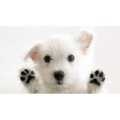 PetGeez Puppy Love