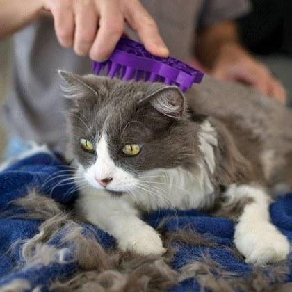 KONG Cat Zoom Groom Purple Grooming Tool