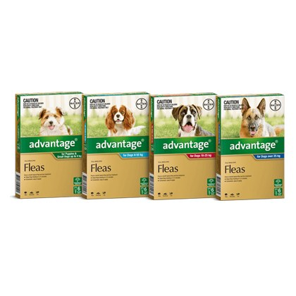 Advantage Spot On Flea and Lice Treatment for Dogs