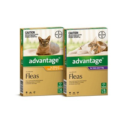 Advantage Spot On Flea and Lice Treatment for Cats and Kittens